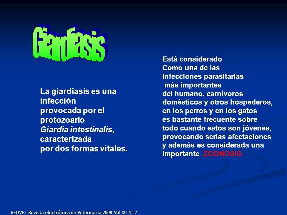 Giardiasis La giardiasis es una infección provocada por el protozoario