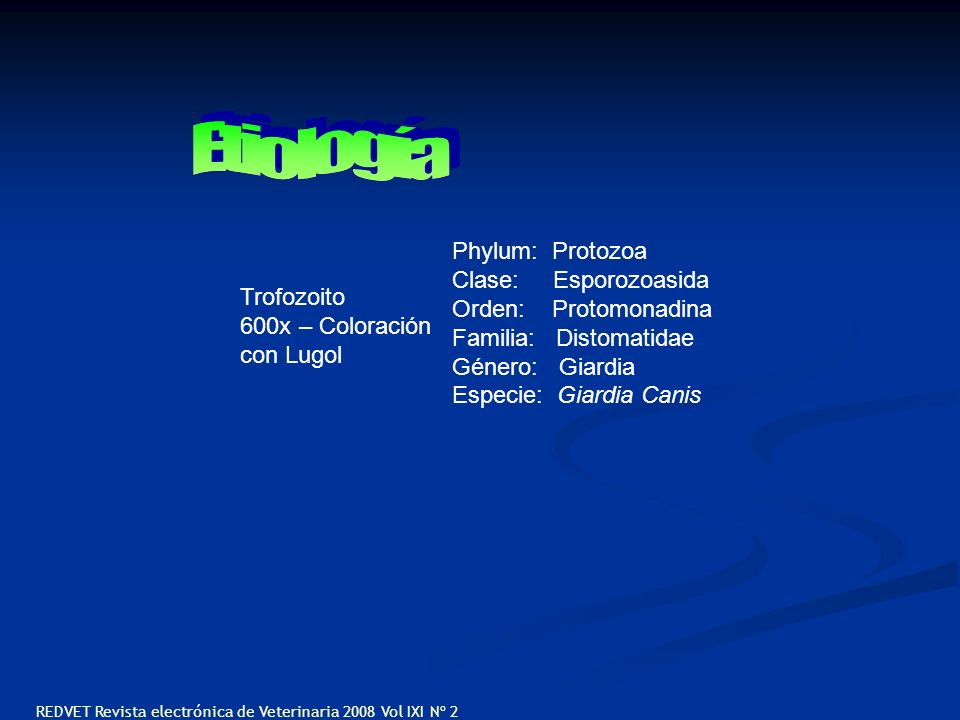 Etiología Phylum: Protozoa Clase: Esporozoasida Orden: Protomonadina