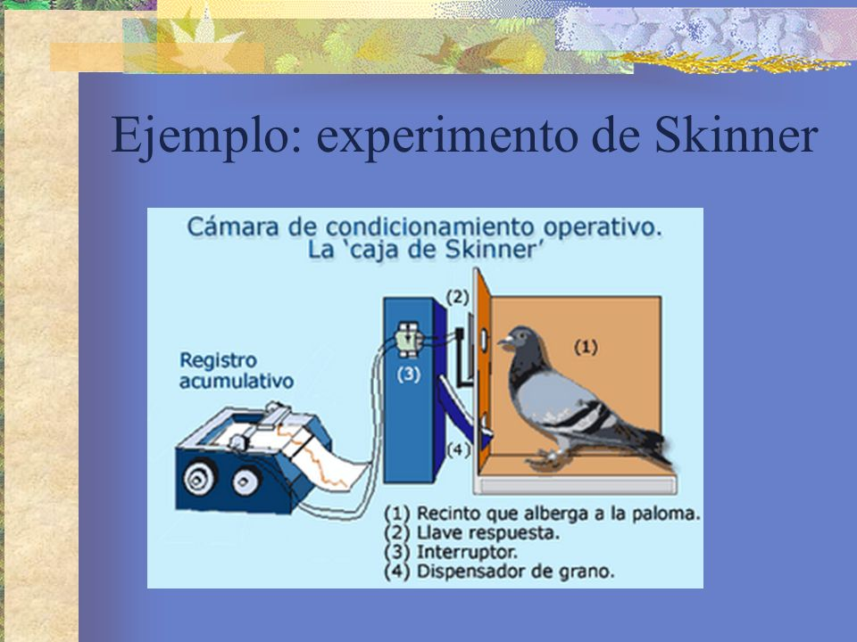 Ejemplo: experimento de Skinner