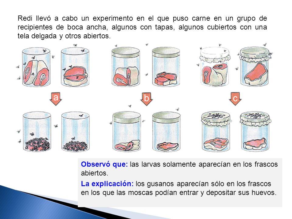 Redi llevó a cabo un experimento en el que puso carne en un grupo de recipientes de boca ancha, algunos con tapas, algunos cubiertos con una tela delgada y otros abiertos.