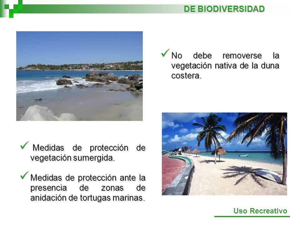 No debe removerse la vegetación nativa de la duna costera.
