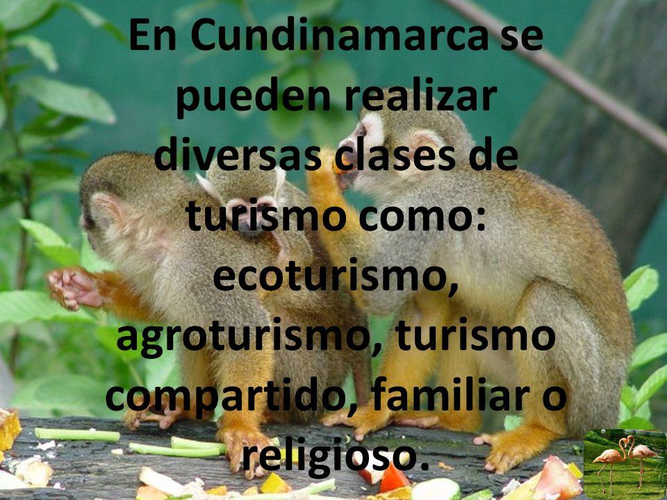 En Cundinamarca se pueden realizar diversas clases de turismo como: ecoturismo, agroturismo, turismo compartido, familiar o religioso.