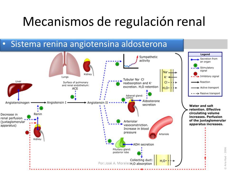 Mecanismos de regulación renal