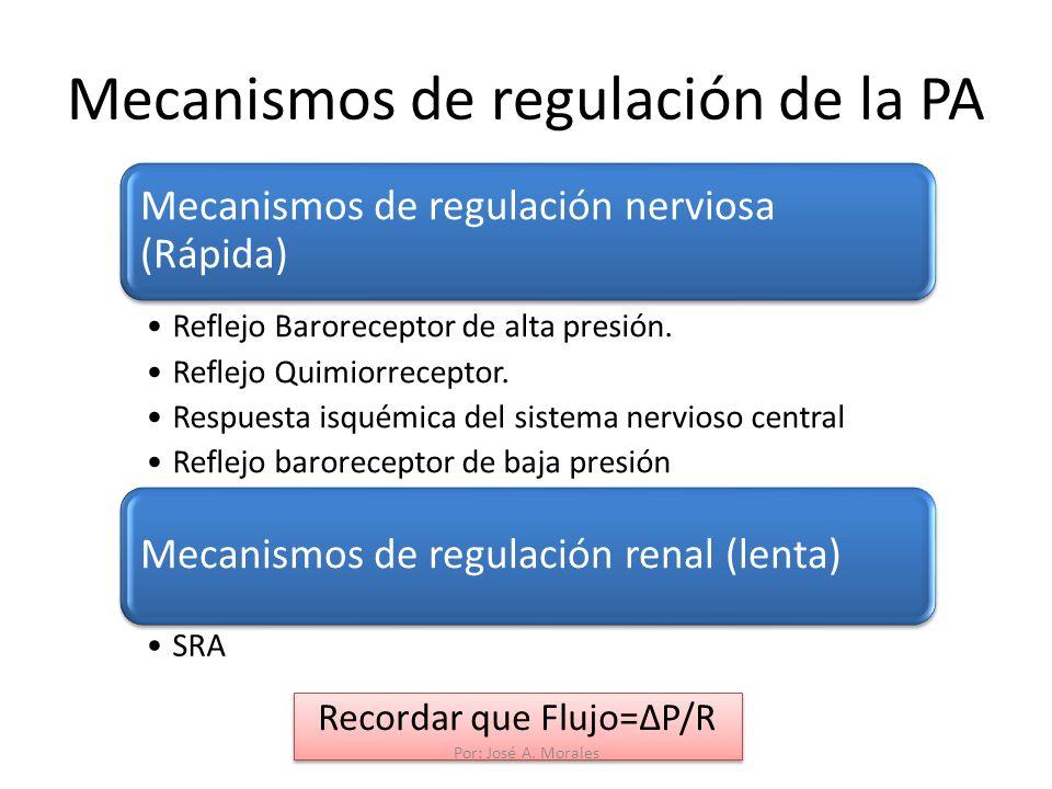Mecanismos de regulación de la PA