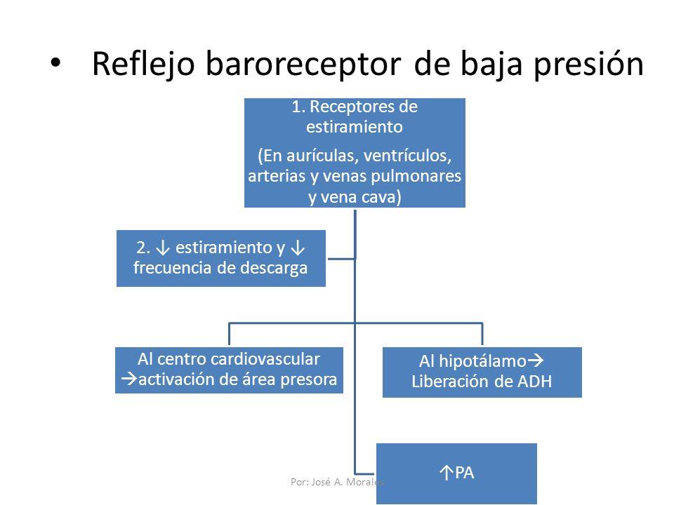 Reflejo baroreceptor de baja presión