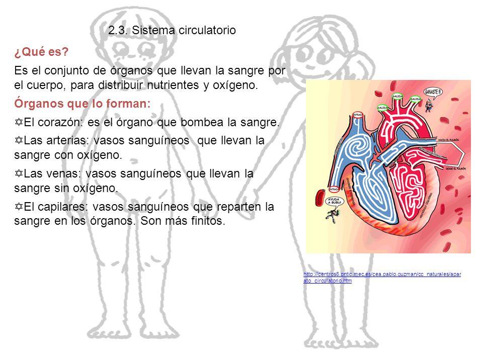 El cuerpo humano 2.3. Sistema circulatorio ¿Qué es