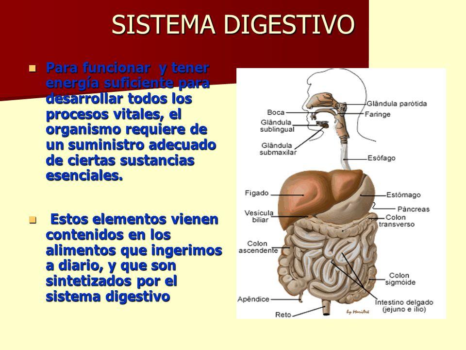 Perfecto Por Qué Necesita Un Sistema Digestivo Adorno - Imágenes de ...