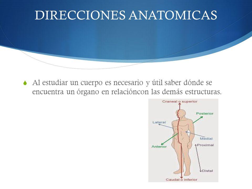 Bonito Lo Que Quiere Decir En La Anatomía Proximal Fotos - Imágenes ...