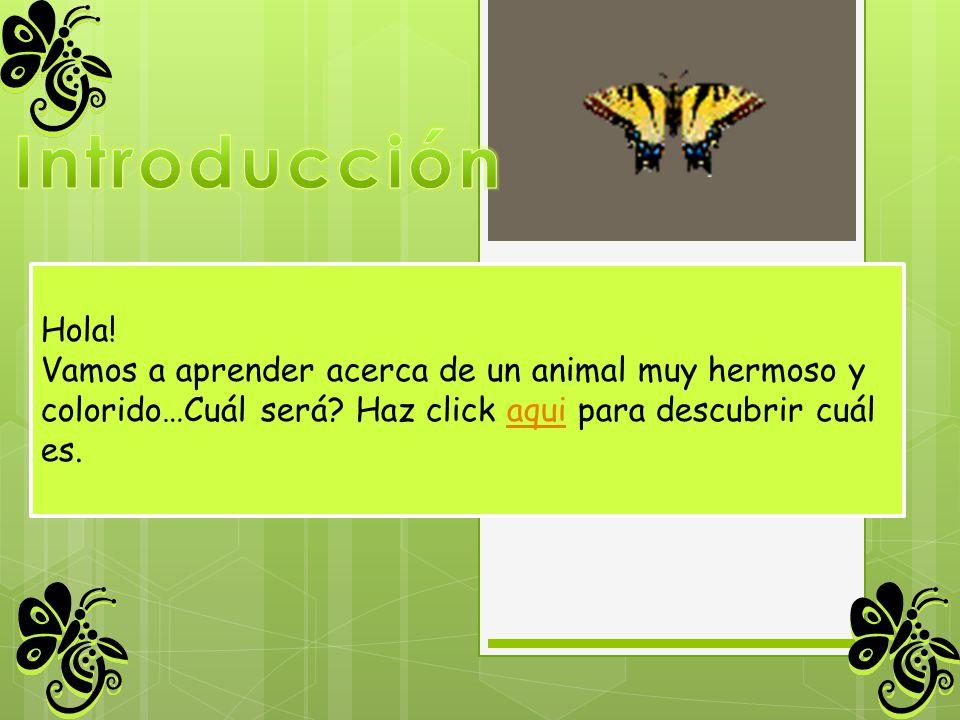 Introducción Hola! Vamos a aprender acerca de un animal muy hermoso y