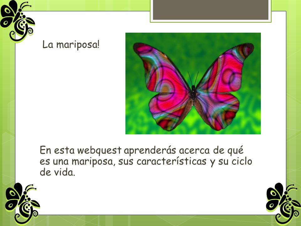 La mariposa.