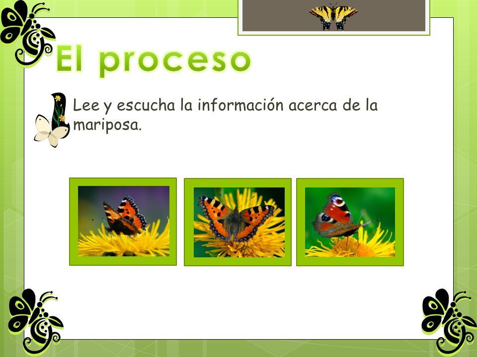 El proceso Lee y escucha la información acerca de la mariposa.