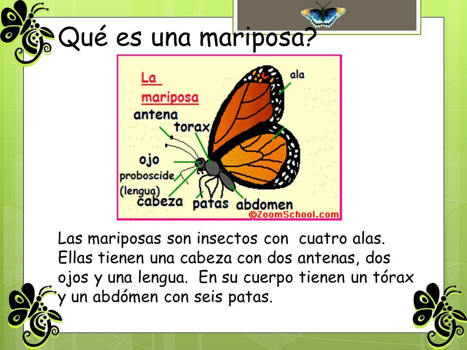Qué es una mariposa