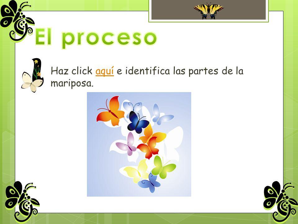 El proceso Haz click aquí e identifica las partes de la mariposa.