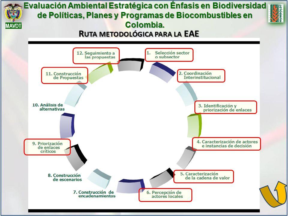 Ruta metodológica para la EAE