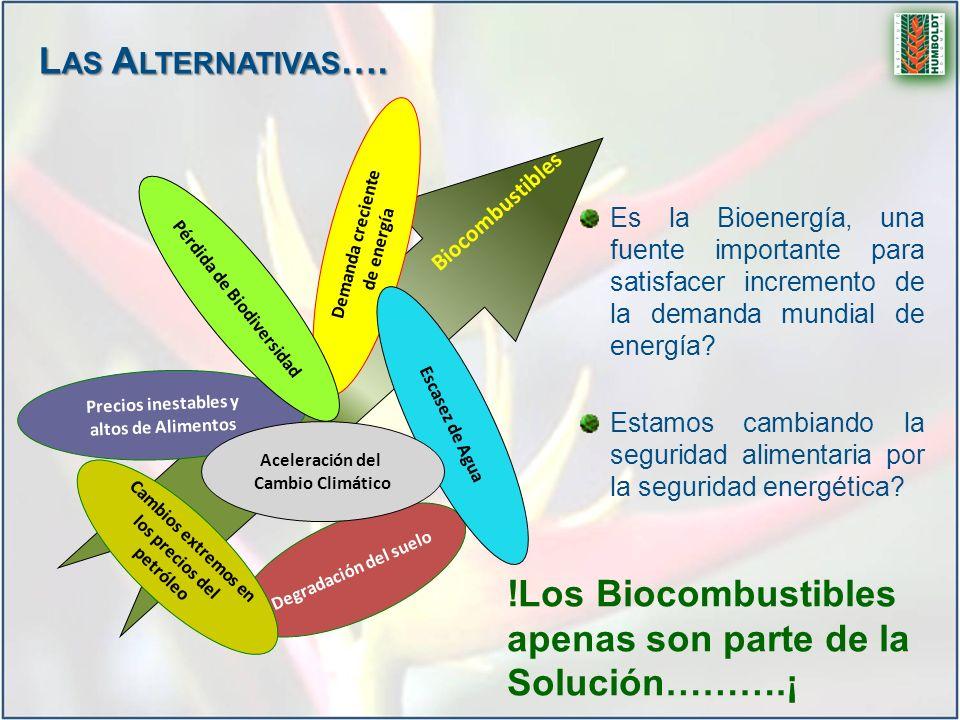 !Los Biocombustibles apenas son parte de la Solución……….¡