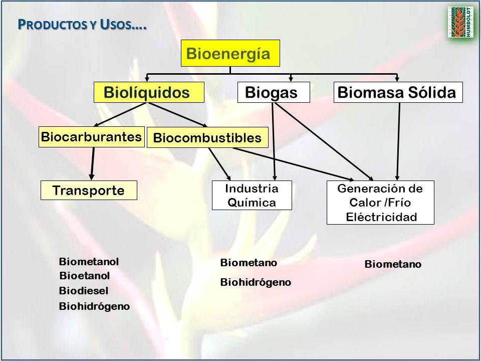 Productos y Usos…. Bioenergía Biolíquidos Biogas Biomasa Sólida