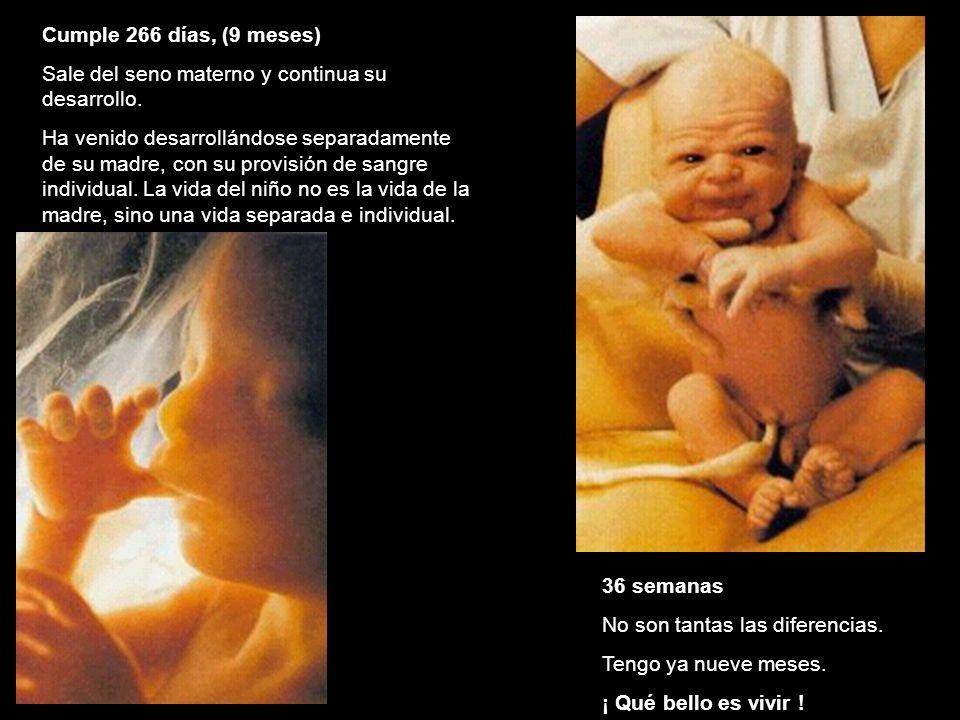 Cumple 266 días, (9 meses) Sale del seno materno y continua su desarrollo.