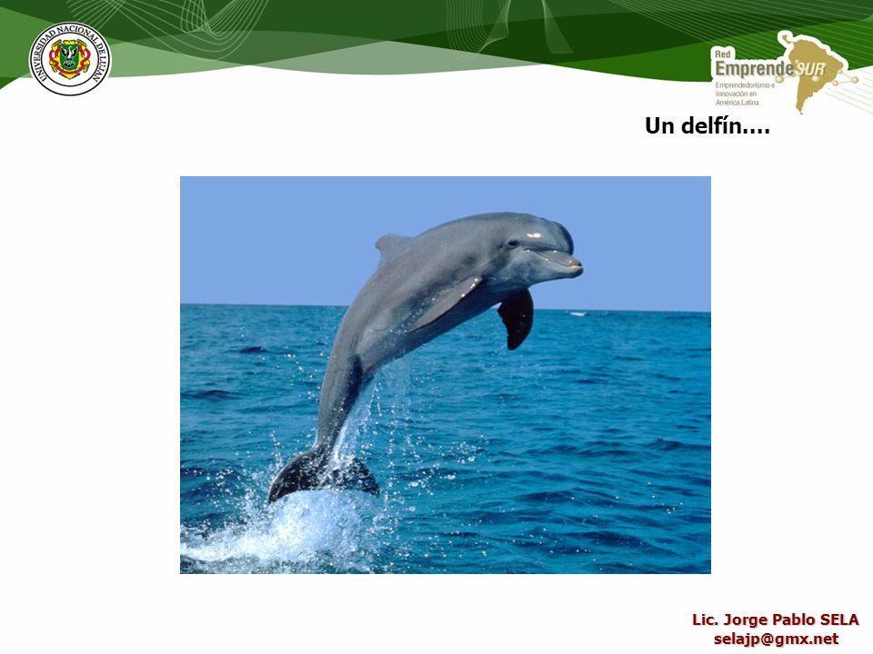 Un delfín.... Lic. Jorge Pablo SELA selajp@gmx.net