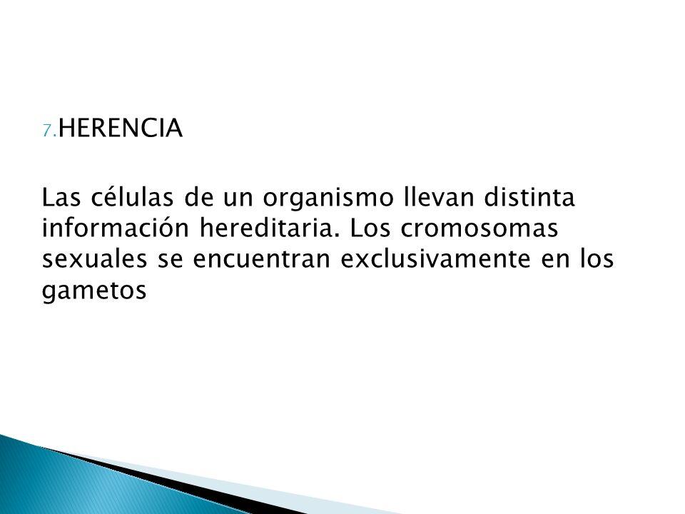 HERENCIA Las células de un organismo llevan distinta información hereditaria.