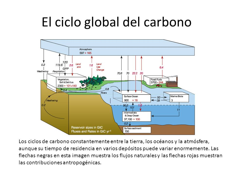 El ciclo global del carbono