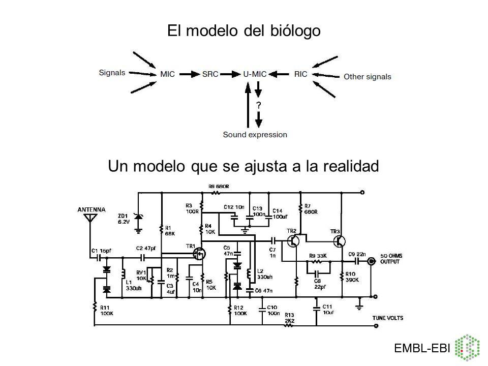 Un modelo que se ajusta a la realidad