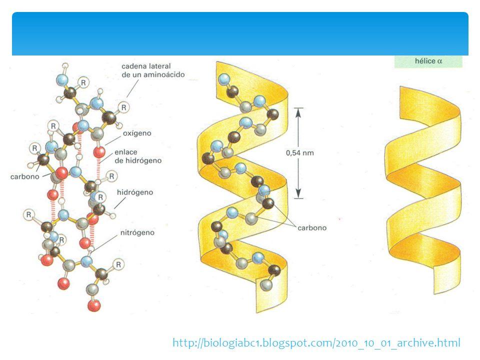 http://biologiabc1.blogspot.com/2010_10_01_archive.html