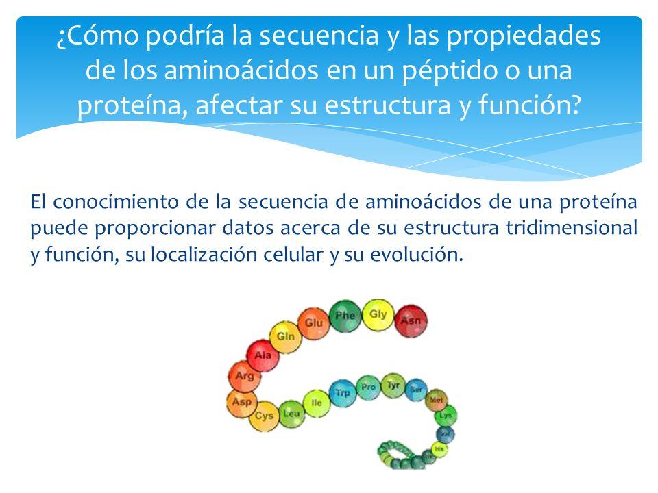 ¿Cómo podría la secuencia y las propiedades de los aminoácidos en un péptido o una proteína, afectar su estructura y función