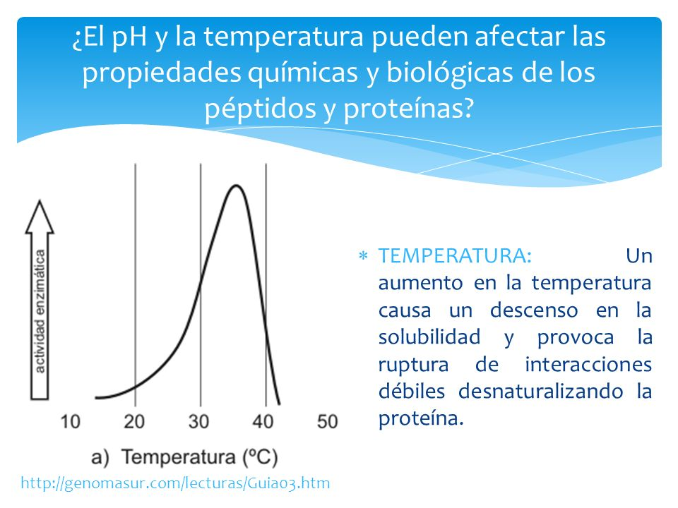¿El pH y la temperatura pueden afectar las propiedades químicas y biológicas de los péptidos y proteínas