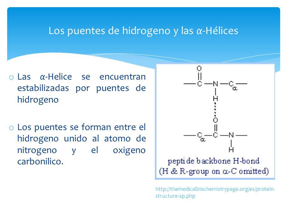 Los puentes de hidrogeno y las α-Hélices