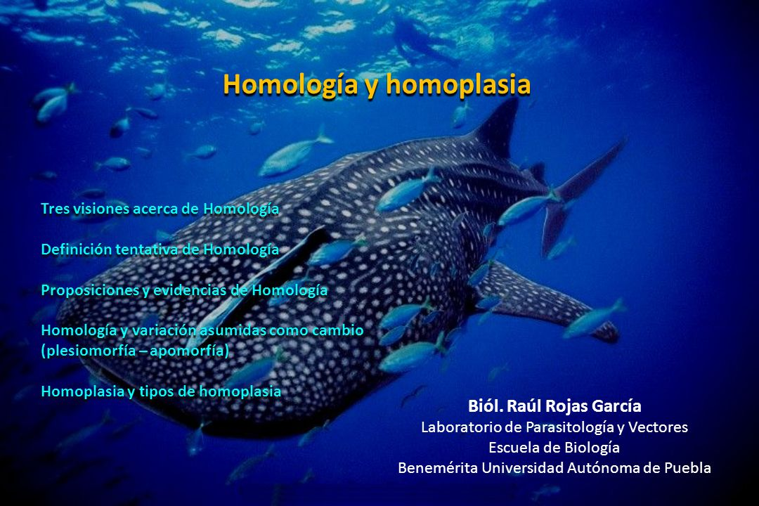 Homología y homoplasia