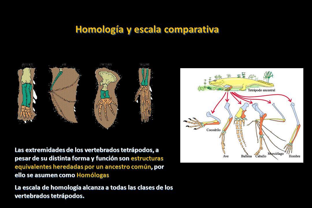 Homología y escala comparativa