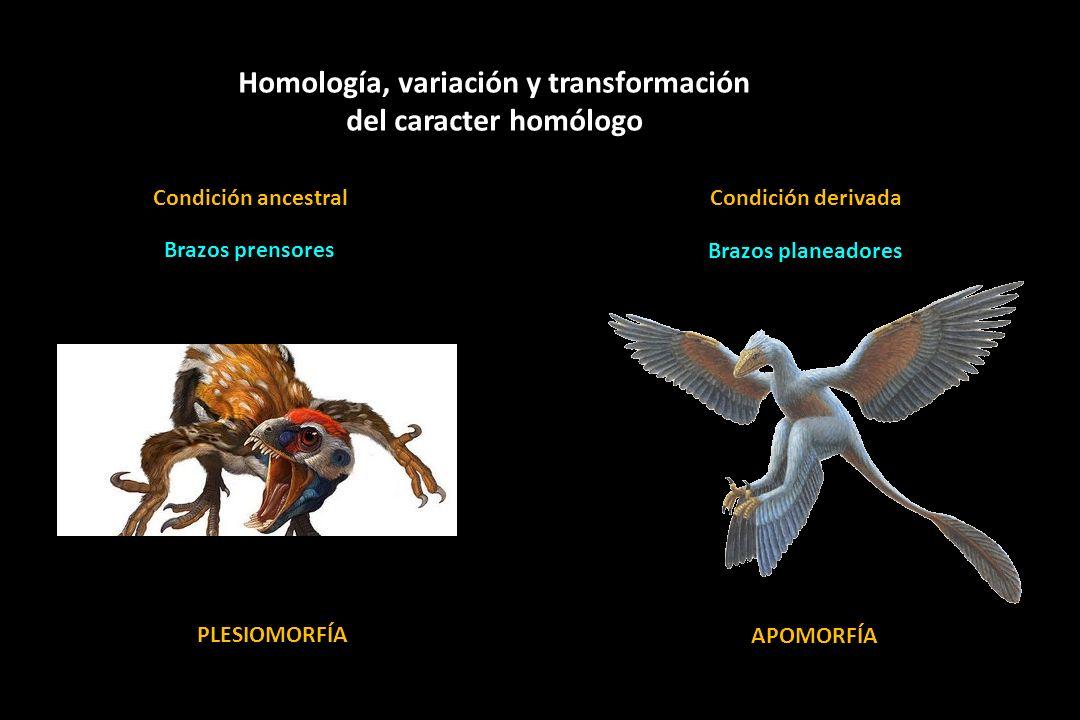 Homología, variación y transformación del caracter homólogo