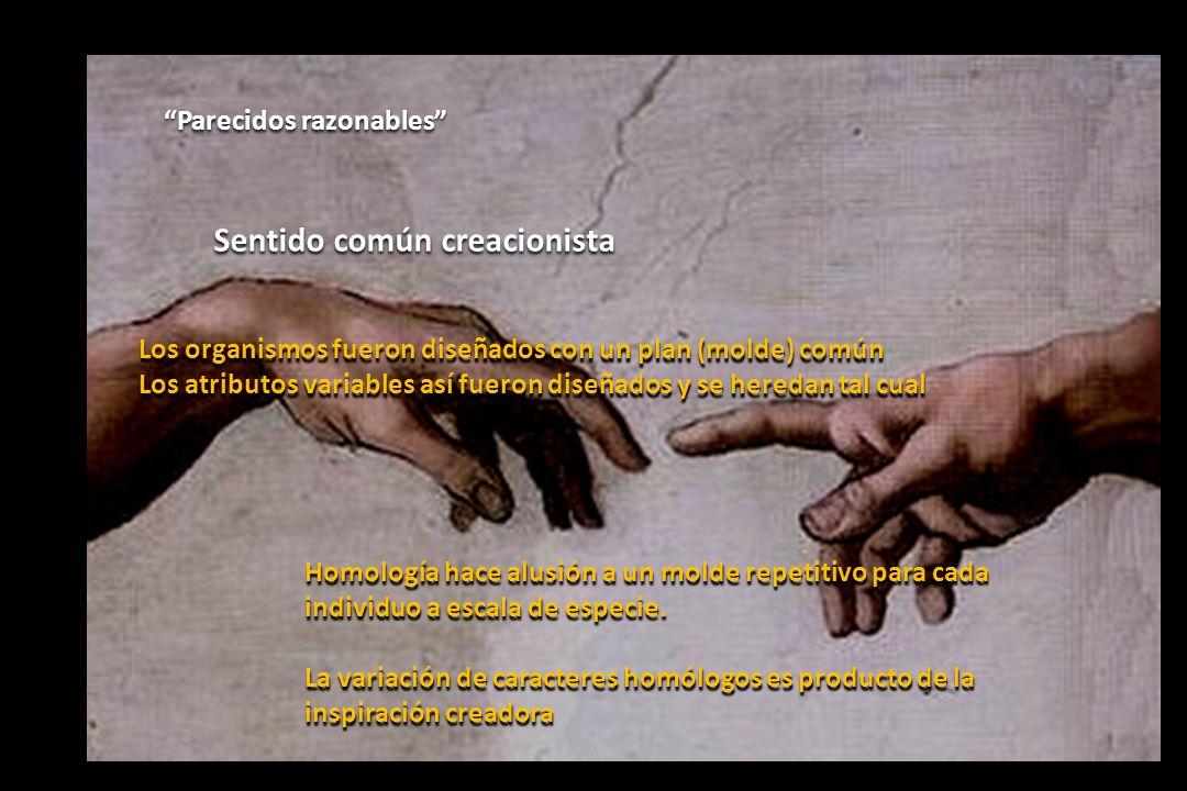Sentido común creacionista