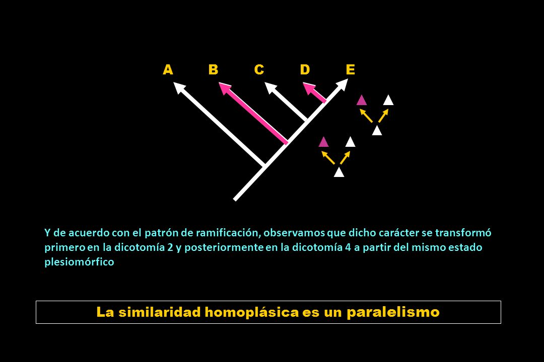 La similaridad homoplásica es un paralelismo