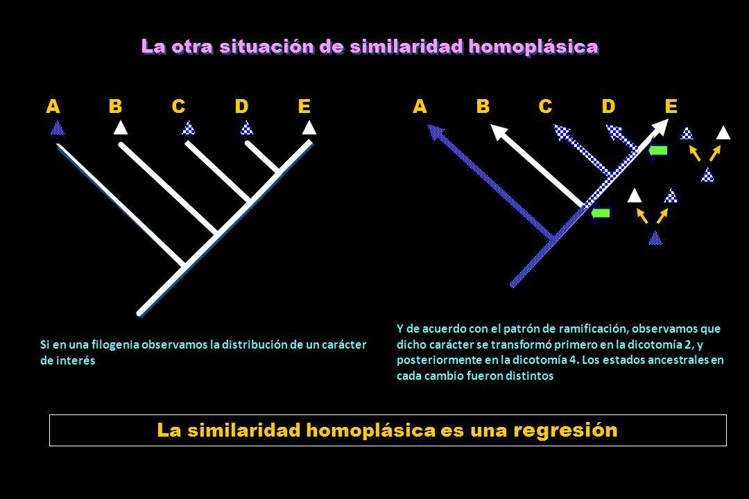 La otra situación de similaridad homoplásica