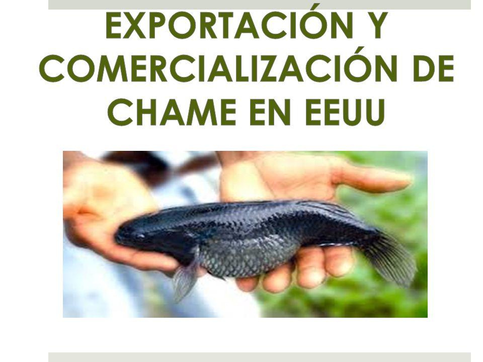 EXPORTACIÓN Y COMERCIALIZACIÓN DE CHAME EN EEUU