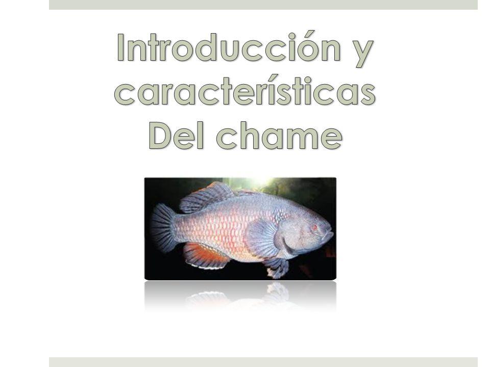 Introducción y características