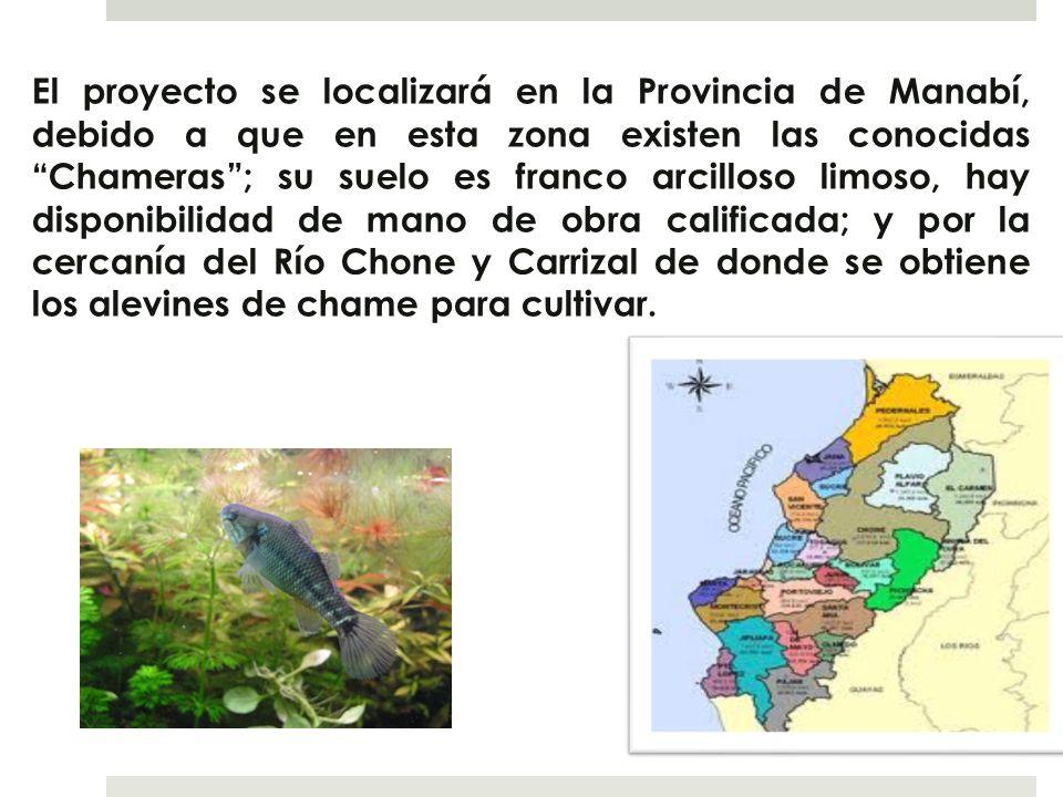 El proyecto se localizará en la Provincia de Manabí, debido a que en esta zona existen las conocidas Chameras ; su suelo es franco arcilloso limoso, hay disponibilidad de mano de obra calificada; y por la cercanía del Río Chone y Carrizal de donde se obtiene los alevines de chame para cultivar.