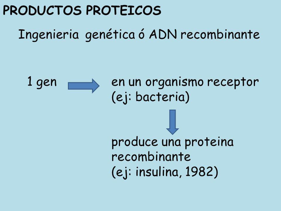 PRODUCTOS PROTEICOS Ingenieria genética ó ADN recombinante. 1 gen en un organismo receptor. (ej: bacteria)
