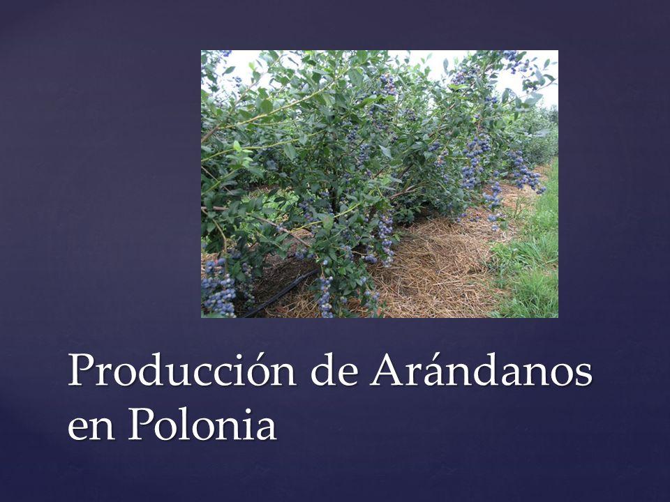 Producción de Arándanos en Polonia
