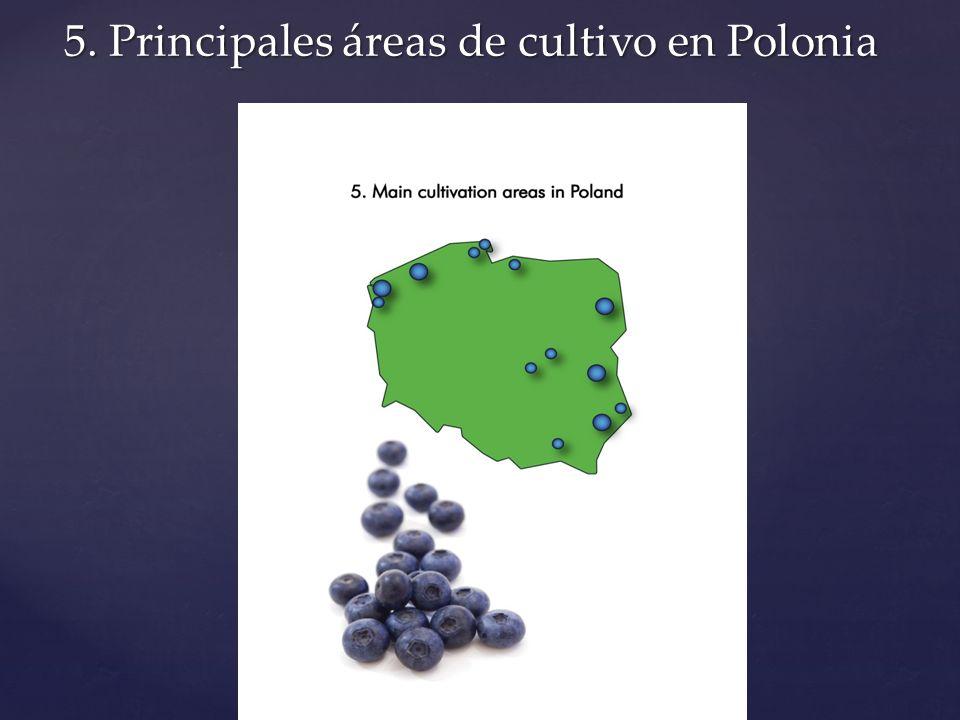 5. Principales áreas de cultivo en Polonia