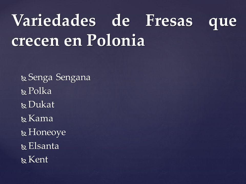 Variedades de Fresas que crecen en Polonia