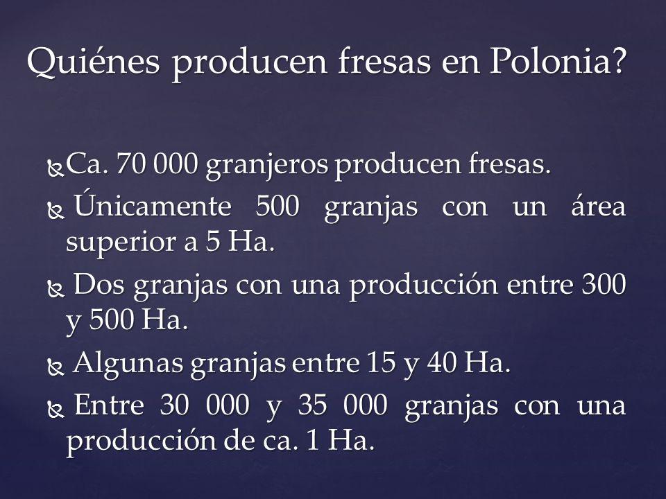 Quiénes producen fresas en Polonia