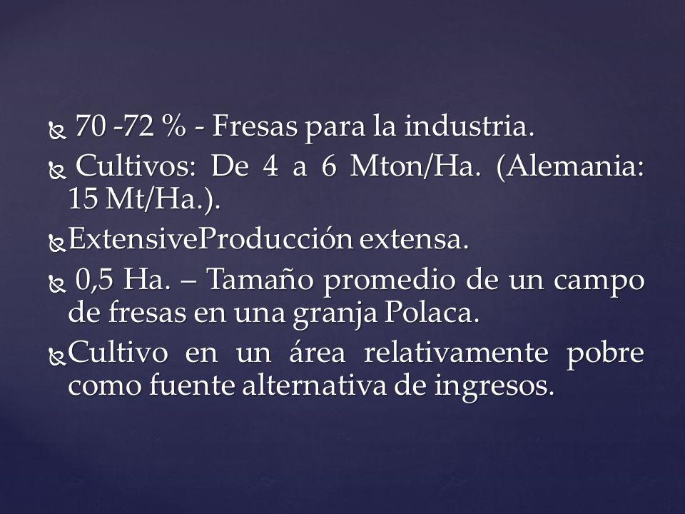 70 -72 % - Fresas para la industria.