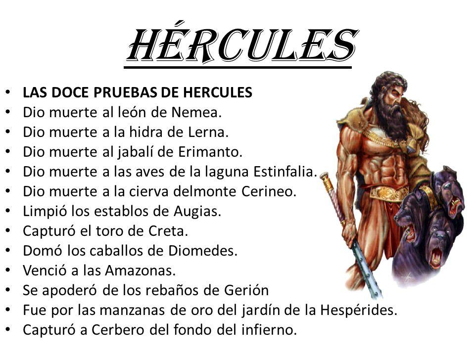 HÉRCULES LAS DOCE PRUEBAS DE HERCULES Dio muerte al león de Nemea.