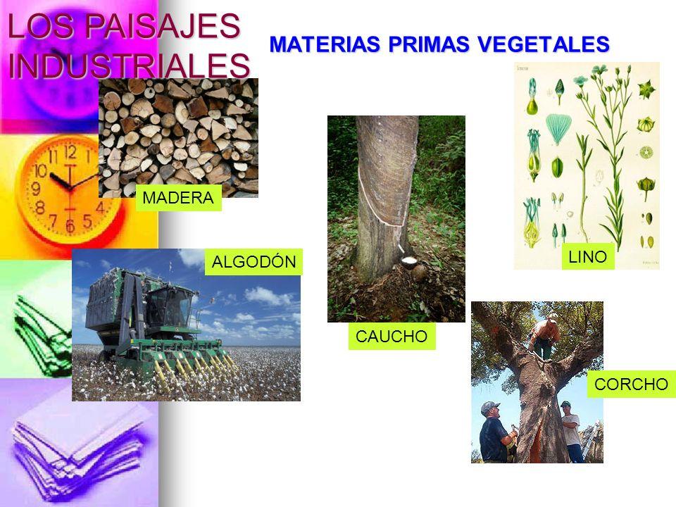 MATERIAS PRIMAS VEGETALES