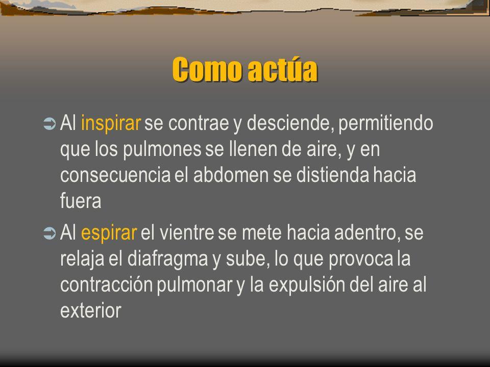 Como actúaAl inspirar se contrae y desciende, permitiendo que los pulmones se llenen de aire, y en consecuencia el abdomen se distienda hacia fuera.