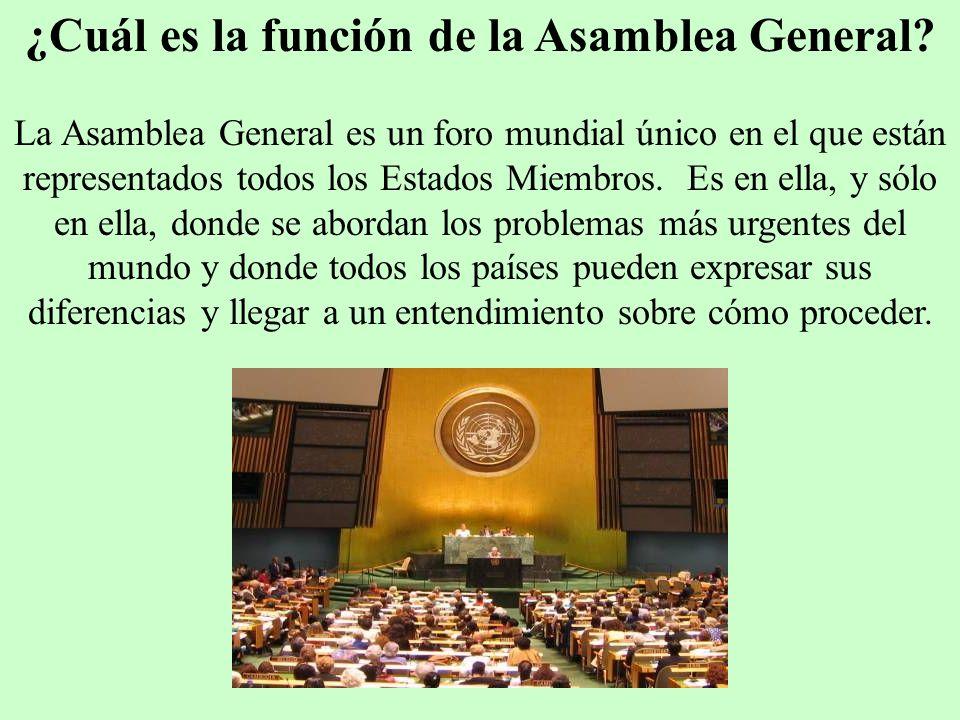 ¿Cuál es la función de la Asamblea General