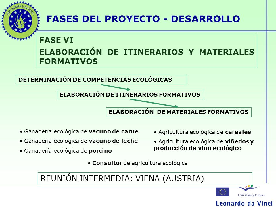 FASES DEL PROYECTO - DESARROLLO