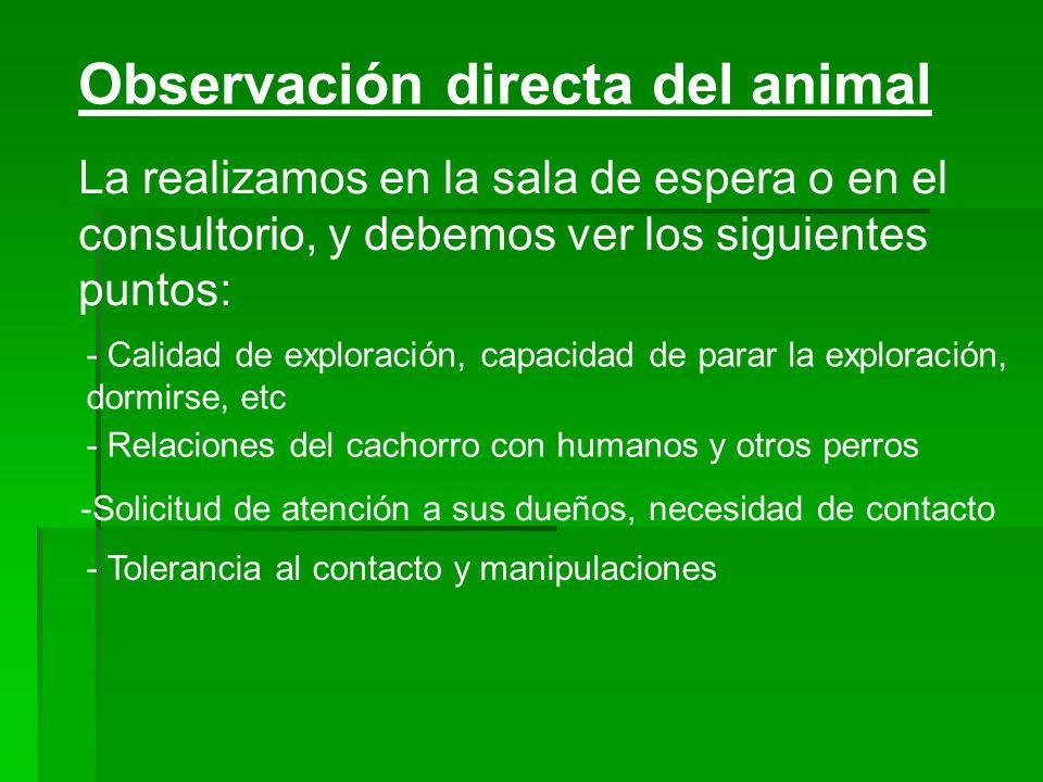 Observación directa del animal